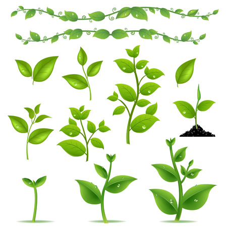 seedling growing: Set Leaves And Plants With Gradient Mesh, Vector Illustration