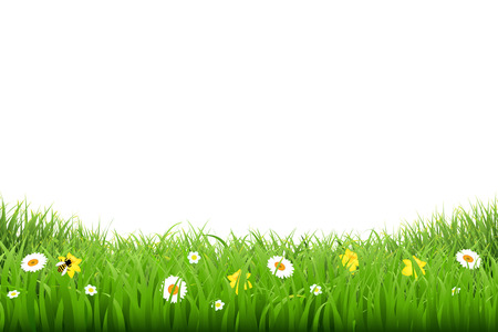 lawn: Grass Border With Flowers With Gradient Mesh, Vector Illustration