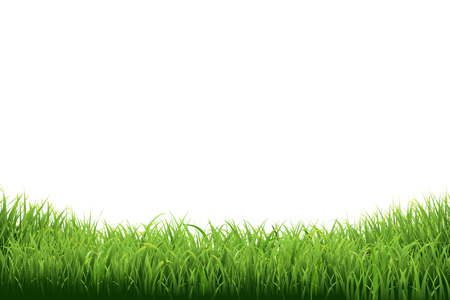 blades of grass: Green Grass Border, Vector Illustration
