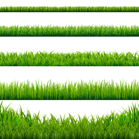 summer field: Big Grass Borders Set, Vector Illustration