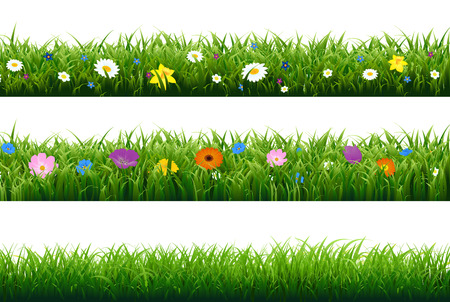 garden flowers: Grass Border With Flower With Gradient Mesh, Vector Illustration