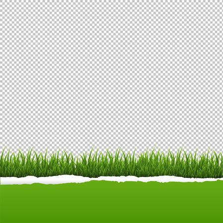 Green Grass And Ripped Paper Transparent Background With Gradient Mesh, Vector Illustration