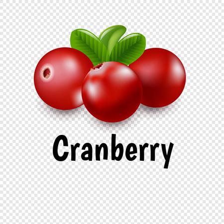 Granberry Set mit transparentem Hintergrund mit Farbverlaufsnetz, Vektor-Illustration Vektorgrafik