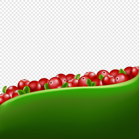 Red Cranberry Border Transparent Background With Gradient Mesh, Vector Illustration