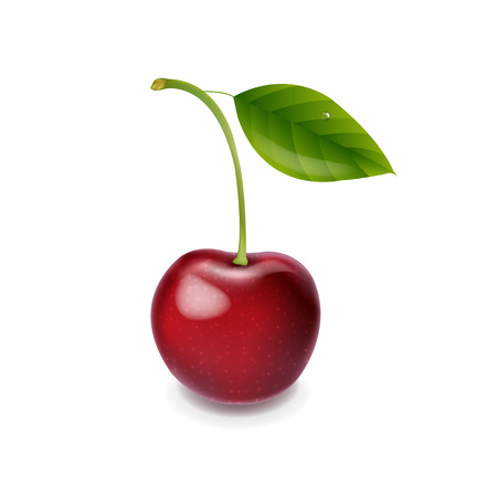 Red Cherry Isolated With Gradient Mesh, Vector Illustration