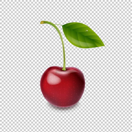 Red Cherry Isolated White Background With Gradient Mesh, Vector Illustration Ilustração