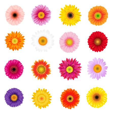 Gros gerbers colorés sertis de filet de dégradé, illustration vectorielle