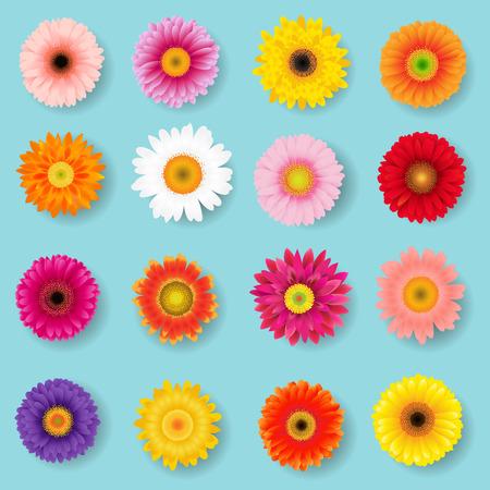 Big Colorful Gerbers Set With Gradient Mesh, Vector Illustration Illustration