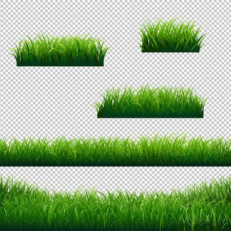 Green Grass Borders Big Collection Transparent background, Vector Illustration Illustration