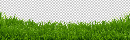 Green Grass Border Transparent Background, Vector Illustration