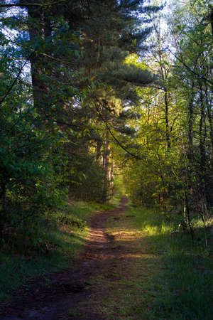 Forest landscape in the summer and autumn seasons with different trees and paths, showing the surrounding nature. Imagens