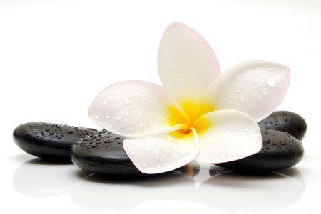 plumeria flower: spa still life Stock Photo