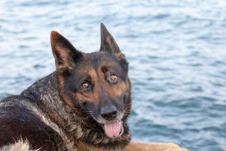 bathed: portrait of the beautiful bathed dog against the blue sea Stock Photo