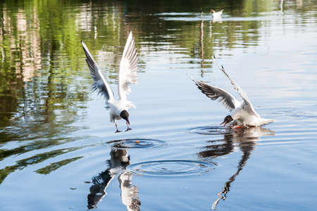 vigilance: the seagulls flying over the river in clear summer day