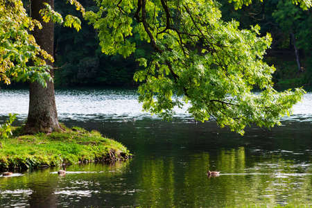 beautiful view of the coast of a pond with ducks in the park in clear summer day