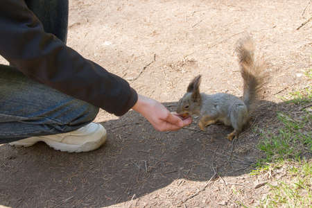 the person feeds a squirrel from a hand in the park in summer day