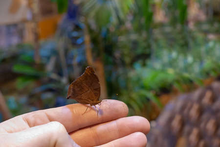 butterfly sitting on a hand of the person. indistinct background