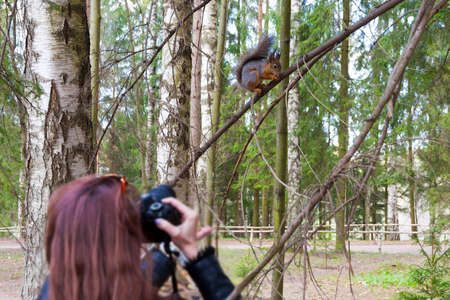 the woman photographs the squirrel sitting on a tree in the park in spring day