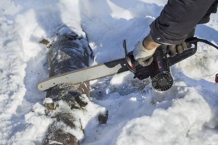 felled: Lumberjack cuts a tree limb into pieces in a forest in the snow. Sawing felled tree into pieces Stock Photo