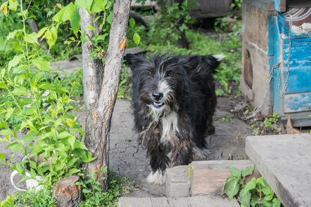 dog near rural doghouse Stock Photo