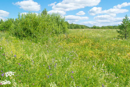 urals: Russian green meadow with flowers