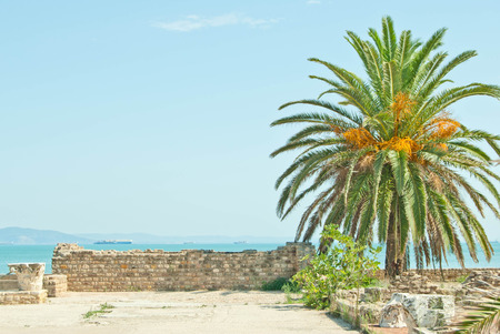 tunis: date palm and ruins at Tunis Stock Photo