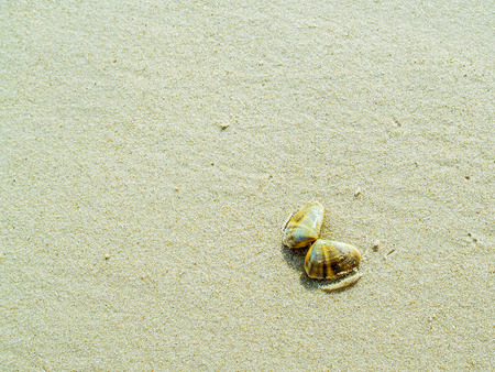 beach butterfly: Shell like butterfly on white sand