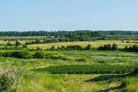expanse: Russian meadow the spirit of expanse Stock Photo