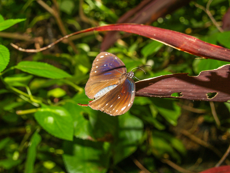 Tropical butterfly at a leaf Stock Photo