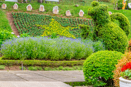 Park of flowers at Dalat Vietnam - Landscape desighn with figure loping of bushes and flowerbed with a star