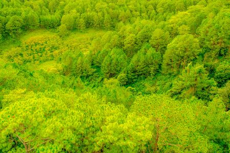 Pine Forest Top View