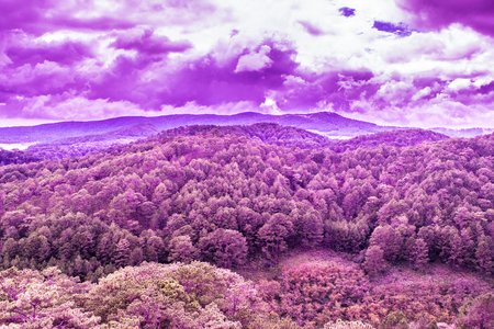 Pine mountain forest surreal view - lush purple texture
