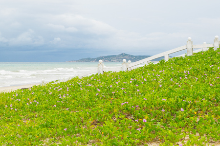 Sea beach landscape with beautiful promenade white fence and morning glory (ipomoea) clump, Vietnam, Nha-trang Stock Photo