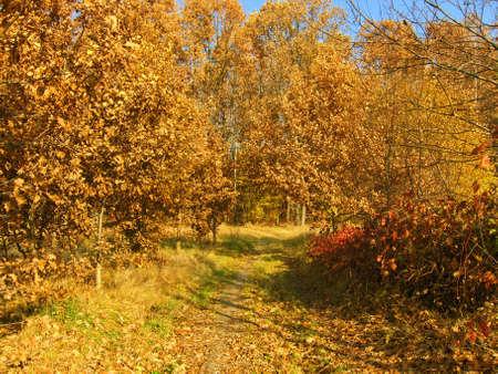 Autumn road through deciduous forest. Stock Photo - 12799929