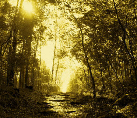 Path in autumn forest, roots of trees, sun , deciduous tree, yellow tint of image on fabric. Stock Photo