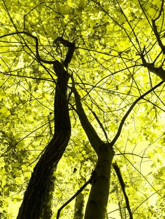 Autumn, deciduous trees, yellow tone of  image