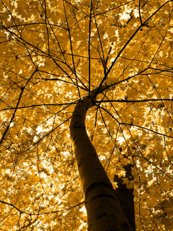 Autumn, deciduous trees, brown tone of  image