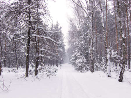 Road in forest, winter, snow. Stock Photo