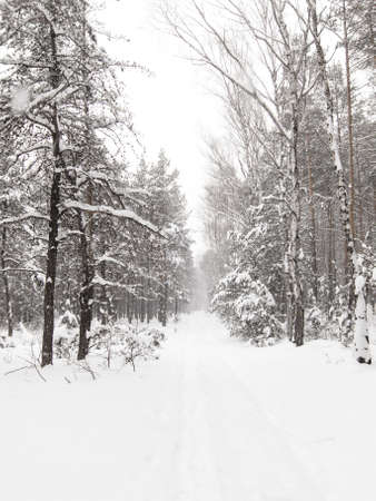 Forest winter, road ,snow. Stock Photo