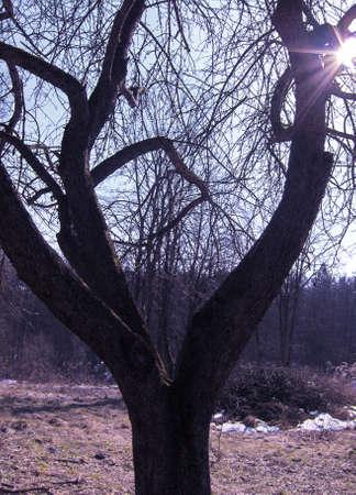 End of winter, tree, sun.