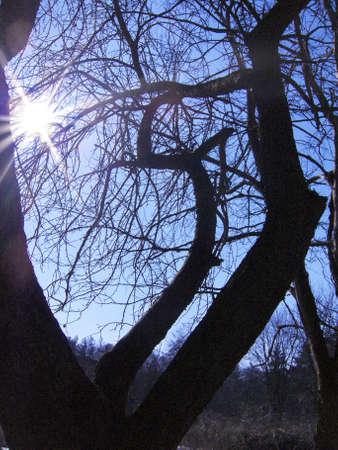 Tree on background of sunny sky.