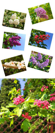 Composition from seven pictures on white background, spring flowers.