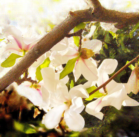 White spring flowers on patterned background.