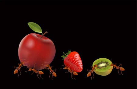 The Ants powerful carrying apple, strawberry and kiwi isolated on black background, vector illustration.