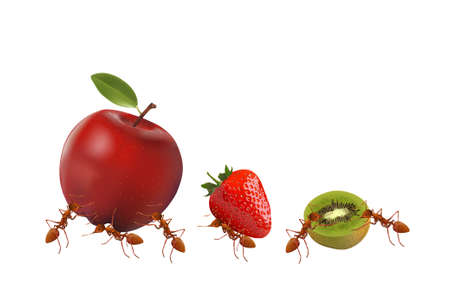 antennae: The Ants powerful carrying apple, strawberry and kiwi isolated on white background, vector illustration. Illustration
