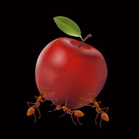 The Ants powerful carrying apple isolated on black background, vector illustration.