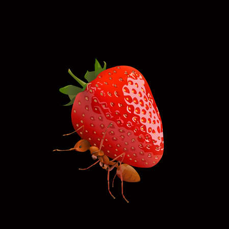antennae: The Ant powerful carrying strawberry isolated on black  background, vector illustration. Illustration