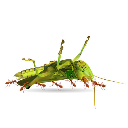 The ants are moving grasshoppers isolated on white background, vector illustration.