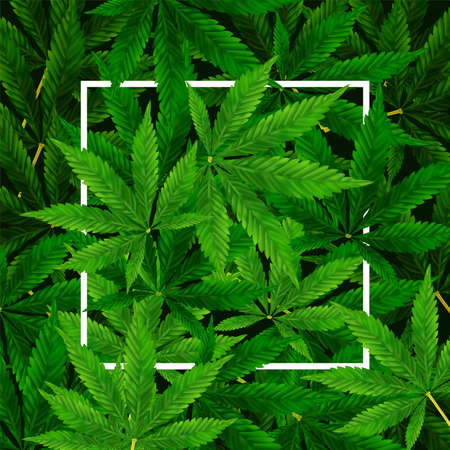 Marijuana or Cannabis Leaf background. Realistic vector illustration of the plant in top view. Stock Illustratie