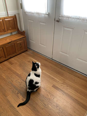 cat waiting at the door